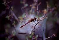 """Dragon Fly"" - Laramie Mountains near Cheyenne, WY."